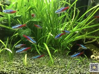 用树莓派DIY共享鱼缸,支持微信远程喂鱼